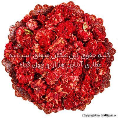 عکس گل انار فارسی خشک