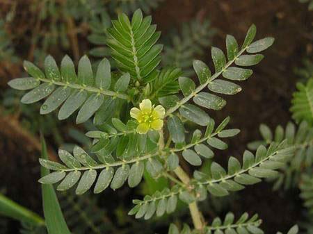 عکسی از گیاه خارخاسک