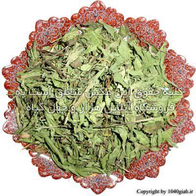 عکس گیاه استویا